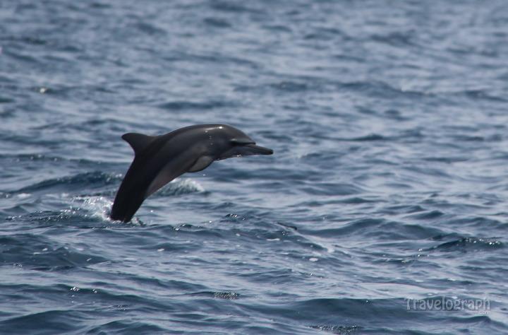 dolphin_cruise_maldives